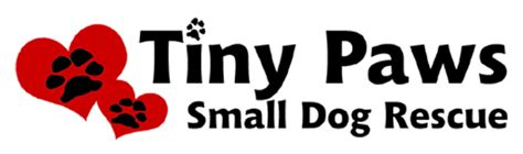 tiny paws small rescue tiny paws small rescue