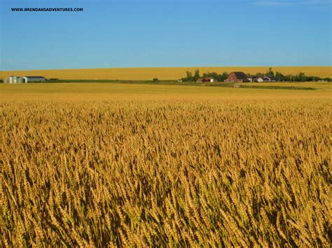what is a prairie the prairie s waves brendan s adventures
