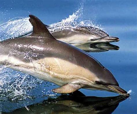 dove fare il bagno coi delfini dove fare il bagno coi delfini home design e ispirazione
