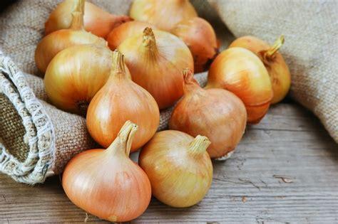cipolle in vaso come coltivare le cipolle non sprecare