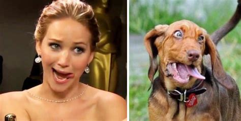 dogs that look like humans 21 you are now pictures that prove we are all dogs
