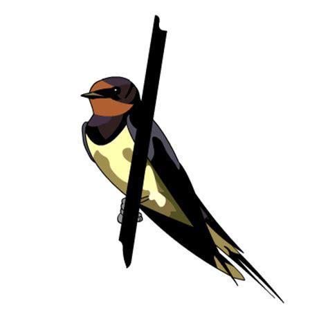 swallow clipart free download clip barn srasri flickr