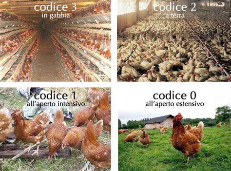 alimentazione naturale galline ovaiole tu che cosa scegli ancora galline in gabbia