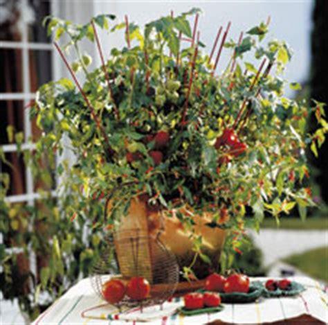himbeeren pflanzen balkon erdbeeren himbeeren und leckere kirschtomaten im eigenen