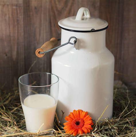 picture photo studio drink cup milk food hay