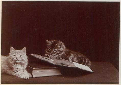 Cat And Books five books that are great introductions to studying
