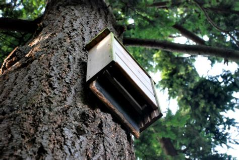 bat house placement going batty building bat houses is good for the environment petslady com
