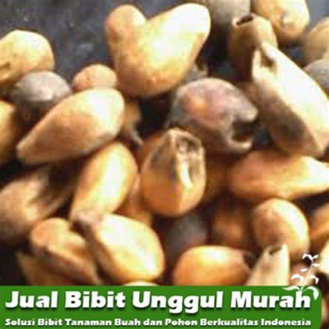 Jual Bibit Kakao Unggul jual biji gamelina murah unggul agro bibit id