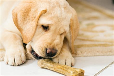 Adding Water To Puppy Food - iafp 2015 pet food safety deadly pet treats and