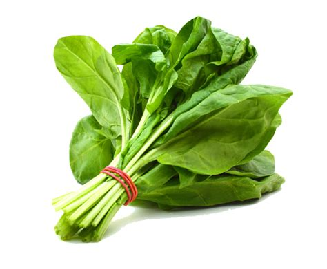 protein 1 cup spinach spinach