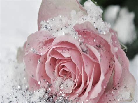 Lovely Sweet White flower wallpaper