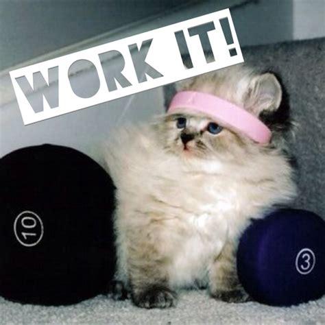 Cat Gym Meme - nuomone apie insanity kulturizmas net diskusijų forumas