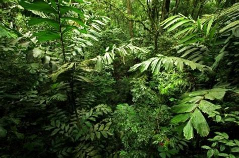 Plants In The Tropical Rain Forest - secret ingredient for the health of tropical rainforests discovered sciencedaily