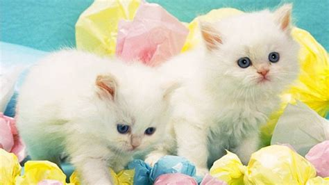 cat easter wallpaper 30 cute and lovely cat wallpapers for desktop