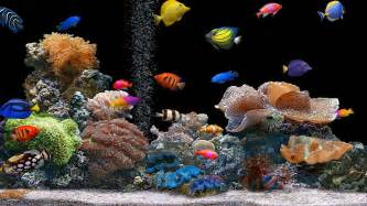 colorful screensavers aquarium colorful screensavers wallpaper images
