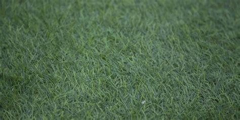 ingrosso tappeti ingrosso tappeti moquette gallo distribuzioni cis