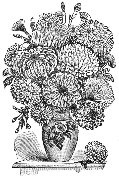 bevalet s hummingbirds and flowers a vintage grayscale coloring book vintage grayscale coloring books volume 3 books chrysanthemums clipart etc