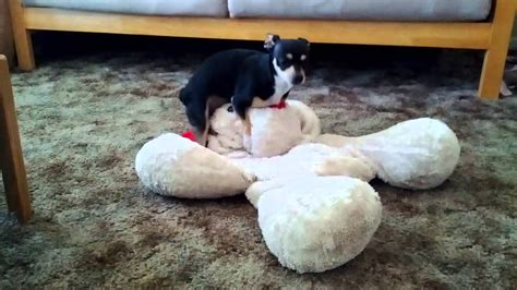 hump toys for dogs