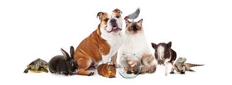 versi di animali da cortile pets for the apartment kuddly