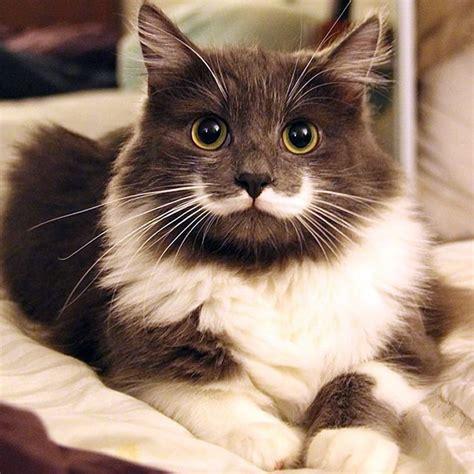 20 Gatos fofos que ficaram famosos na internet   ROCK'N TECH