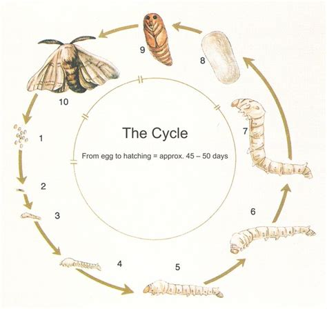 earthworm cycle diagram 13 best images about kindy poster on back to