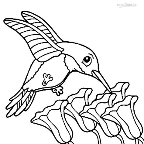 coloring page hummingbird printable hummingbird coloring pages for cool2bkids