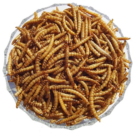 dried mealworms birds hedgehogs