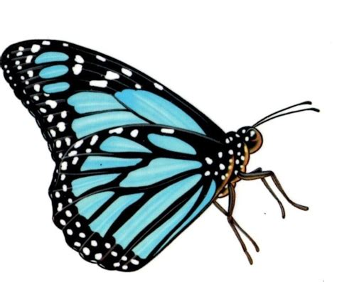 blue monarch butterfly tattoos tattooic