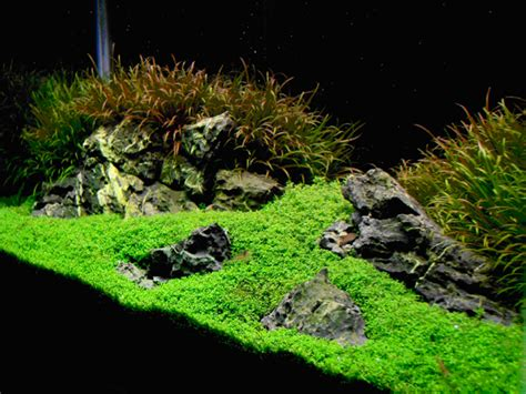 iwagumi aquascape aquascaping world magazine iwagumi style
