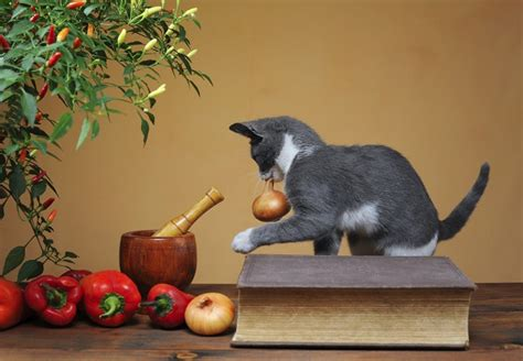 dogs eat onions 5 summer foods that cats and dogs shouldn t eat plus 5 healthy