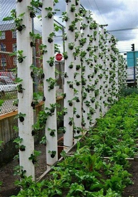 vertical pvc pipe vegetable garden goodshomedesign