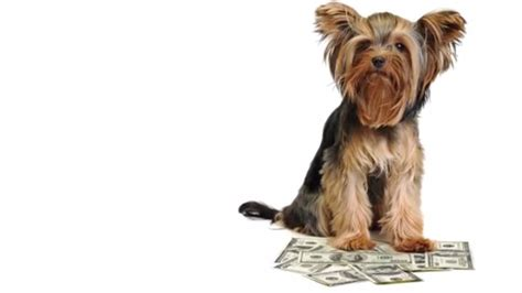 average cost of puppy costs of pet ownership pets plus us dogs best medz