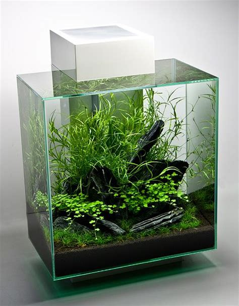 Edge Tank fluval edge ii aquascaping live plants