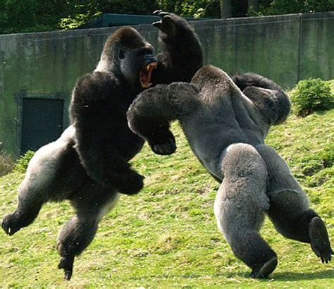animals fighting the 20 awesomest animal battles teluudailies