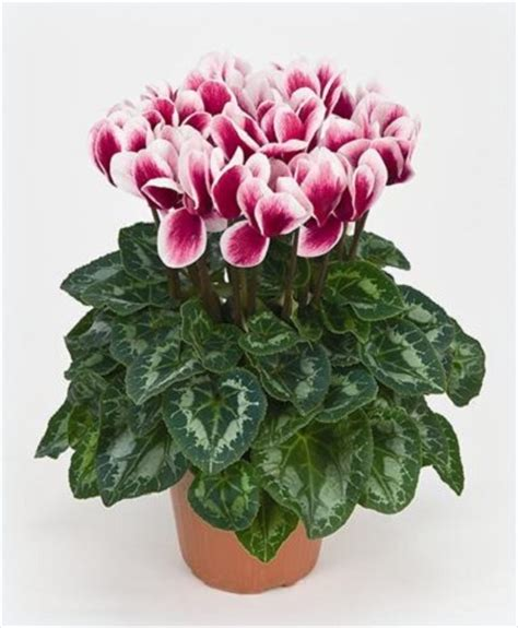 imagenes flores y nombres imagenes de plantas con flores y sus nombres las mejores