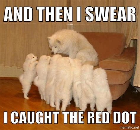 Laser Pointer Meme - storytelling dog know your meme
