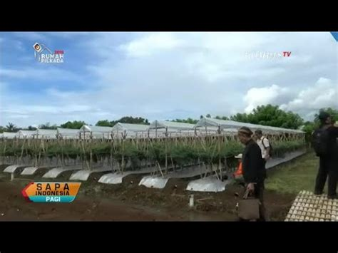 Plastik Untuk Atap Tanaman inovasi atap plastik untuk cegah hama tanaman