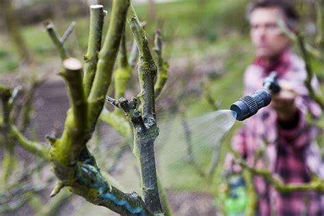 Traitement Chignon Sur Tronc D Arbre by Traiter Naturellement Les Arbres Fruitiers En Hiver