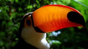 animals in the tropical ra rest tropical rain forest pictures to pin on pinterest