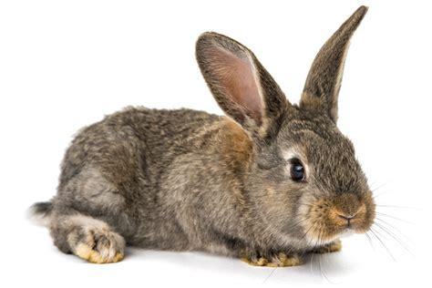 like a bunny my bunny ruined my sex life salon com