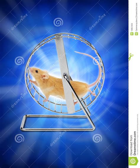 mouse hamster exercise wheel stock image image 13857253