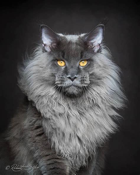 worlds  beautiful cats top