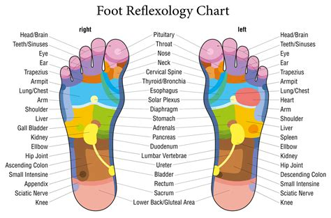 Foot pressure points 15 reflexology pressure points to