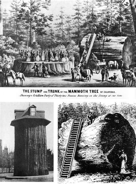 Exhibitionism Wikipedia The Free Encyclopedia   file giant sequoia exhibitionism jpg wikipedia
