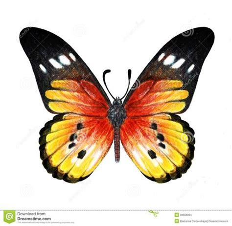 imagenes de mariposas oscuras mariposas para dibujar a lapiz buscar con google