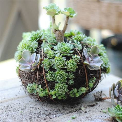 22 table decorations and centerpiece ideas with succulents