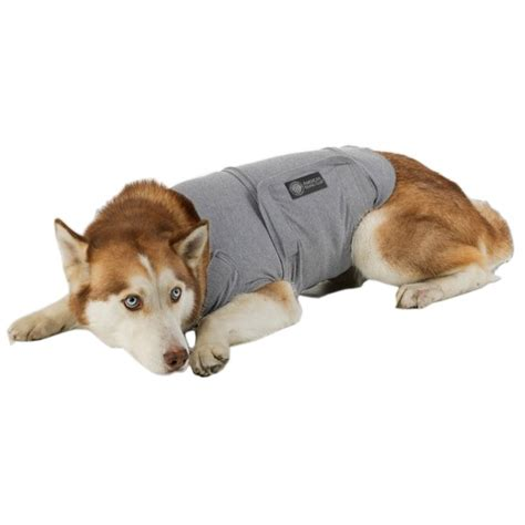 anti anxiety for dogs akc calming coat anti anxiety coat for dogs care 4 dogs on the go