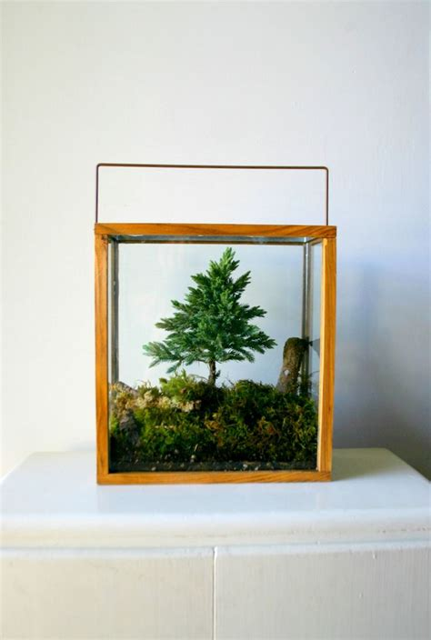 terrarium table table top forest terrarium