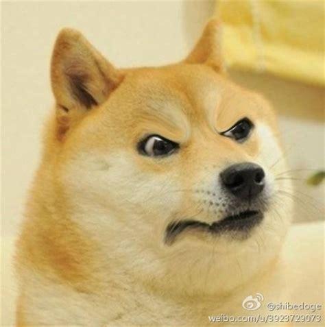 Meme Dog Wow - 翰doge表情doge表情 doge神烦狗qq表情图片