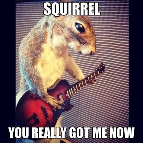 Squirrel Nuts Meme - 7 best images about squirrel pun friday on pinterest